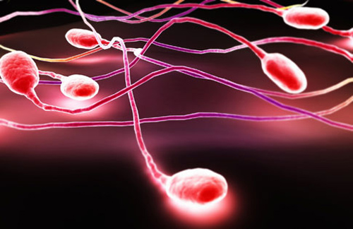 sperma-ee-vliyanie-na-organizm